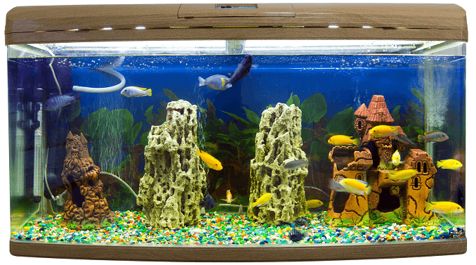 Saltwater vs Freshwater Aquariums: 7 Myths Debunked ...