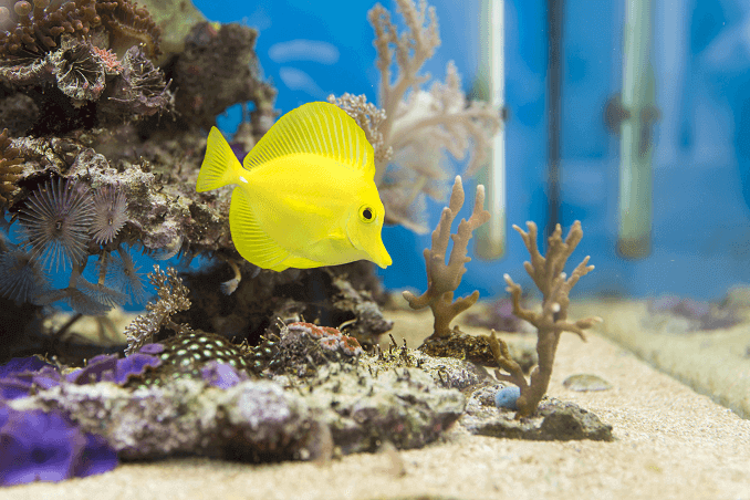 Saltwater Fish in Aquarium