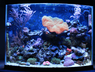 what makes the perfect cichlid tank fishkeeping world
