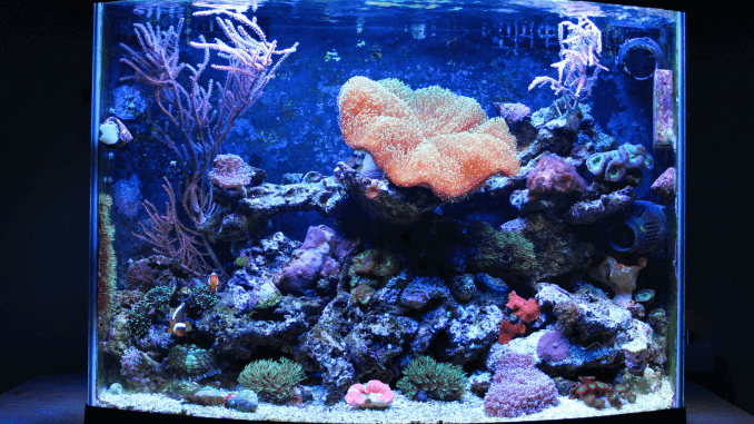 10 Things You Shouldnt Put In Your Fish Tank
