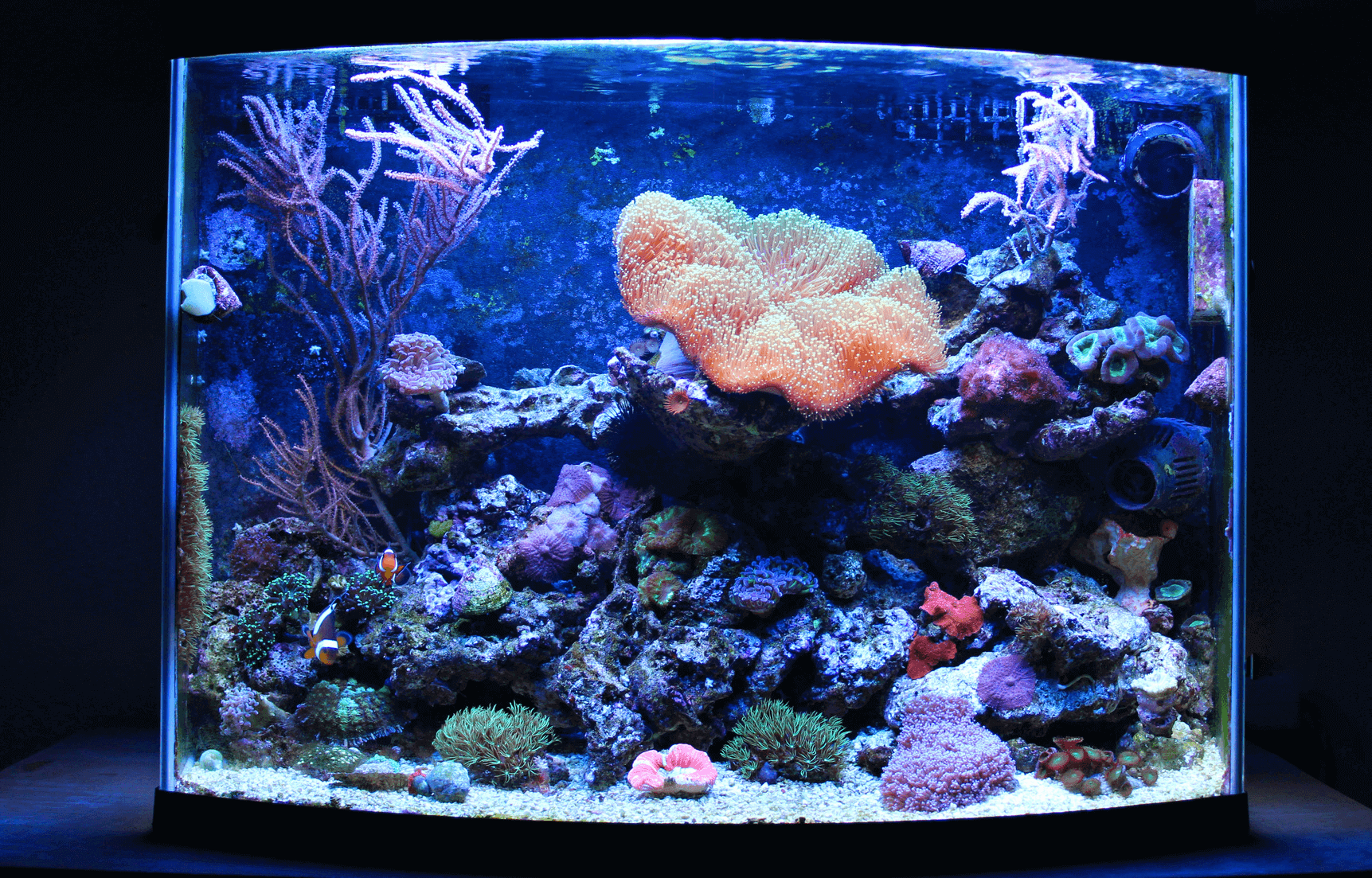 10 Things You Shouldn T Put In Your Fish Tank Fishkeeping World
