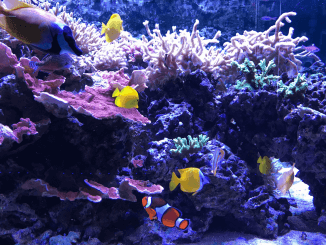 21 Beginner Aquarium Mistakes Bank