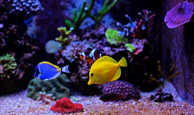 8 Reasons to Keep Fish - Fishkeeping World