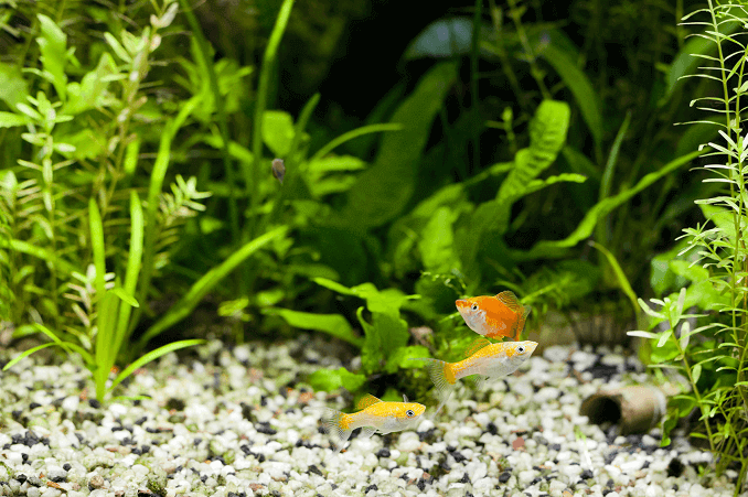 21 beginner aquarium mistakes and how to avoid them fishkeeping