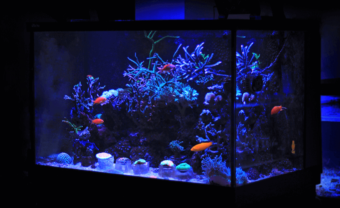 Small Home Aquarium