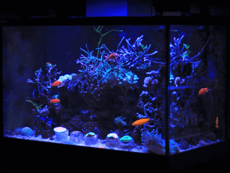 What Size Fish Tank Should I Get Blog Banner