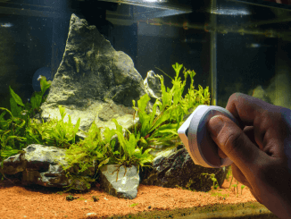 How Much Time Do You Need For Fishkeeping Cover