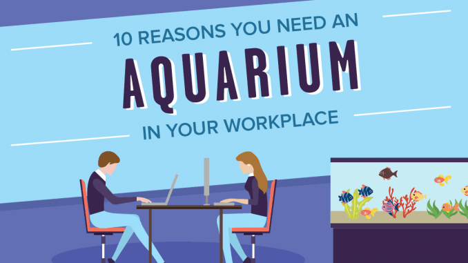 10 Reasons Why You Need an Aquarium in Your Workplace Article Banner