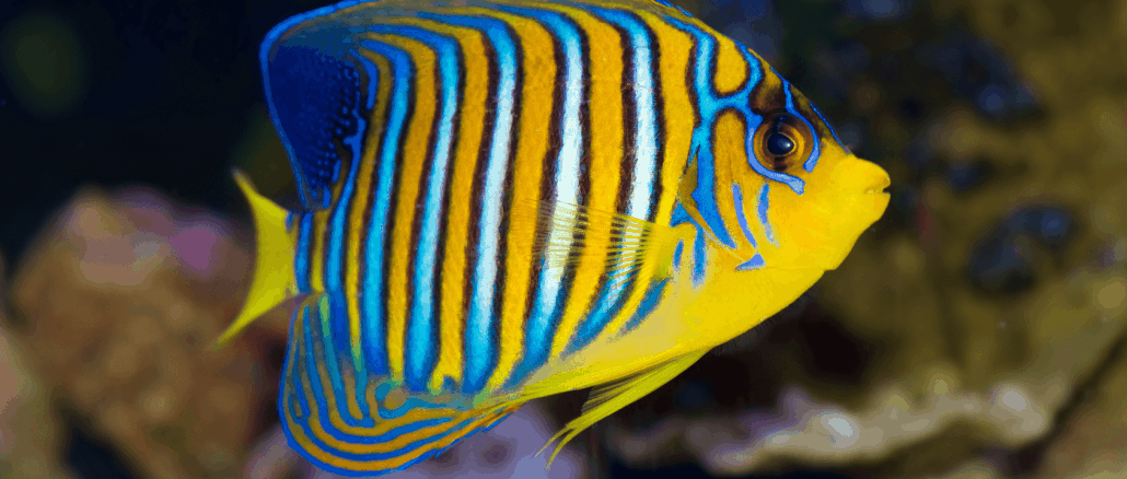 Best tropical fish to own