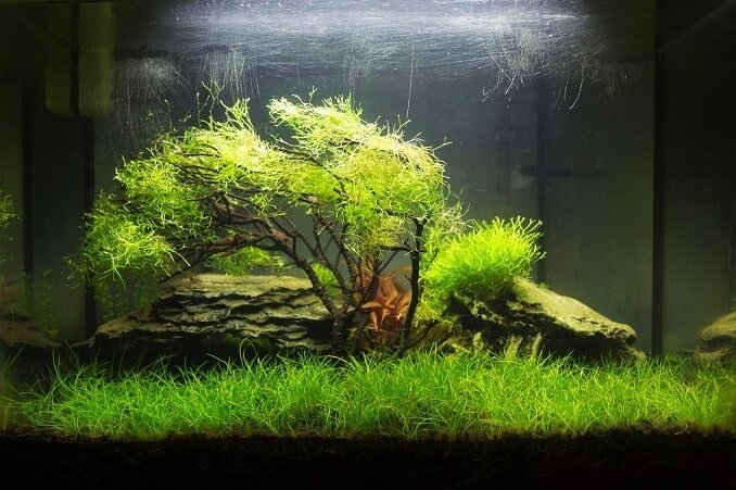 Java Moss: The Complete Guide (Care, Growing and More ...