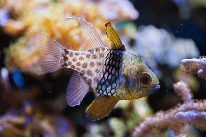 14 popular saltwater fish for beginners fishkeeping world