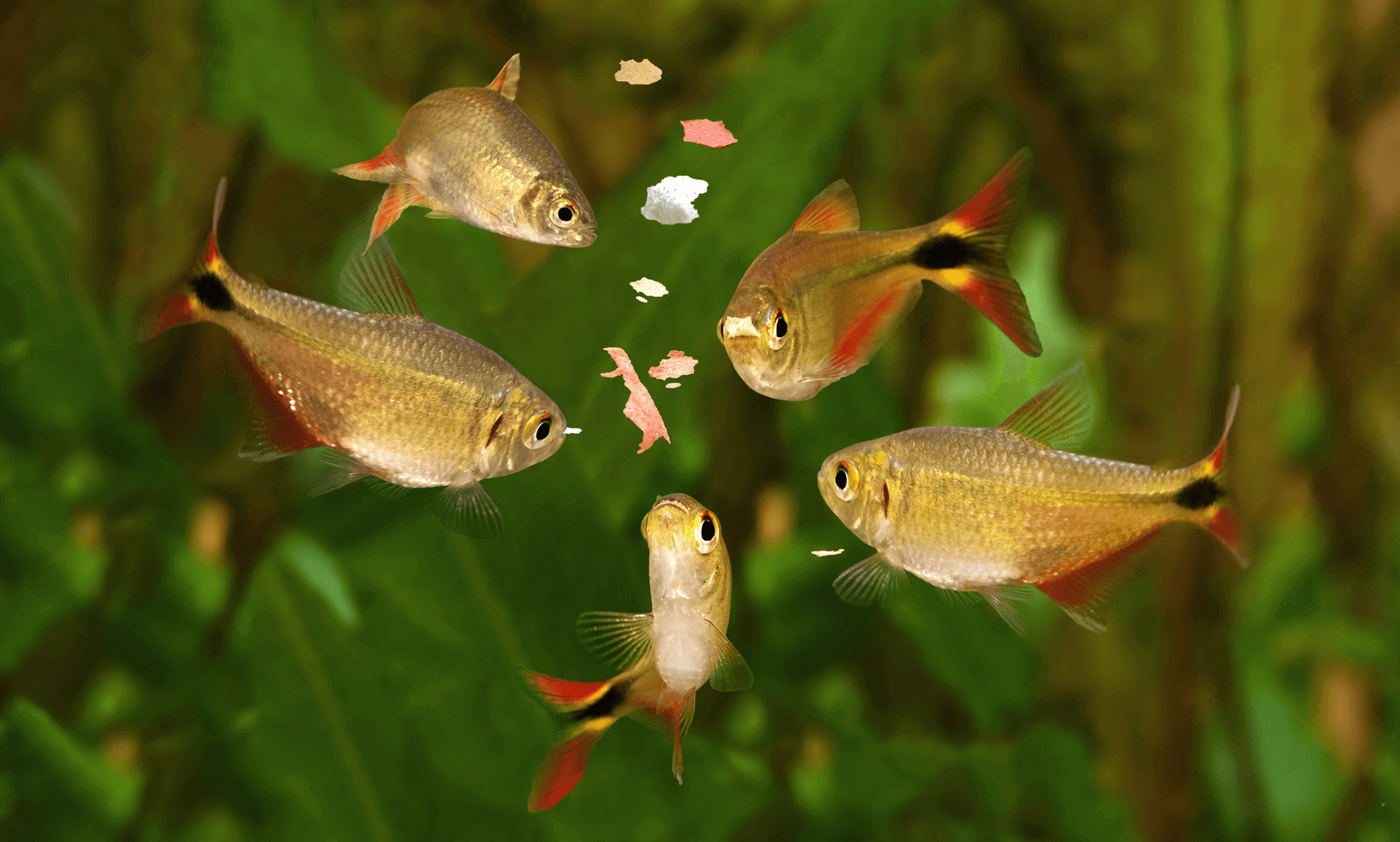 What Do Fish Eat Have You Ever