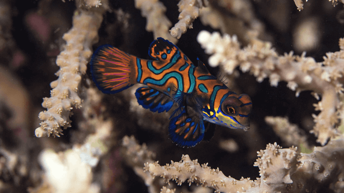 13 Most Popular Colorful Fish Banner