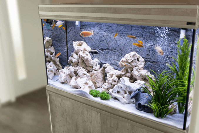 Aquarium with Cichlids
