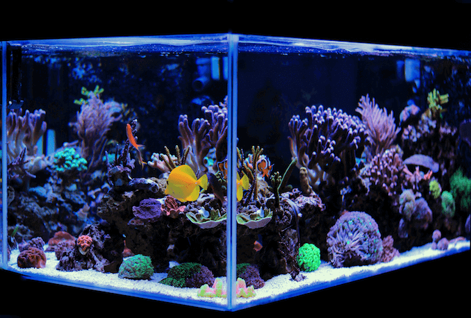 how to clean a fish tank in five easy steps fishkeeping world