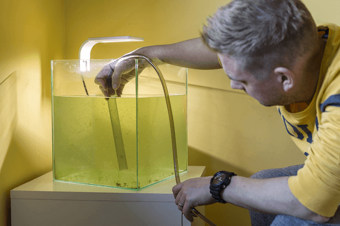 Siphoning Water From the Tank