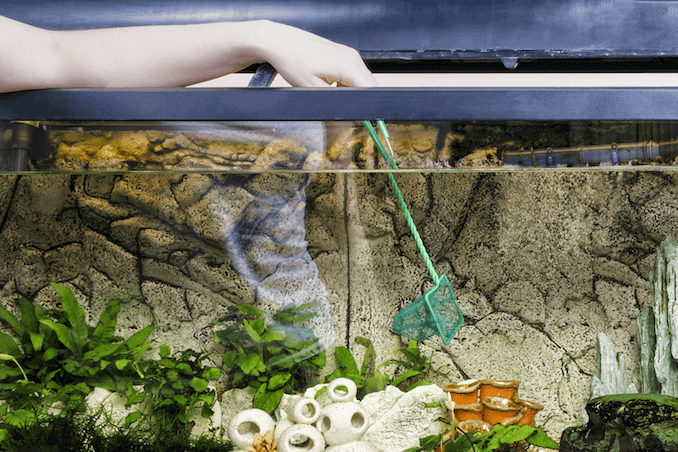 How to Clean a Fish Tank in Five Easy Steps | Fishkeeping World