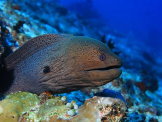 Moray Eel Care Guide Size, Habitat and Lifespan Banner