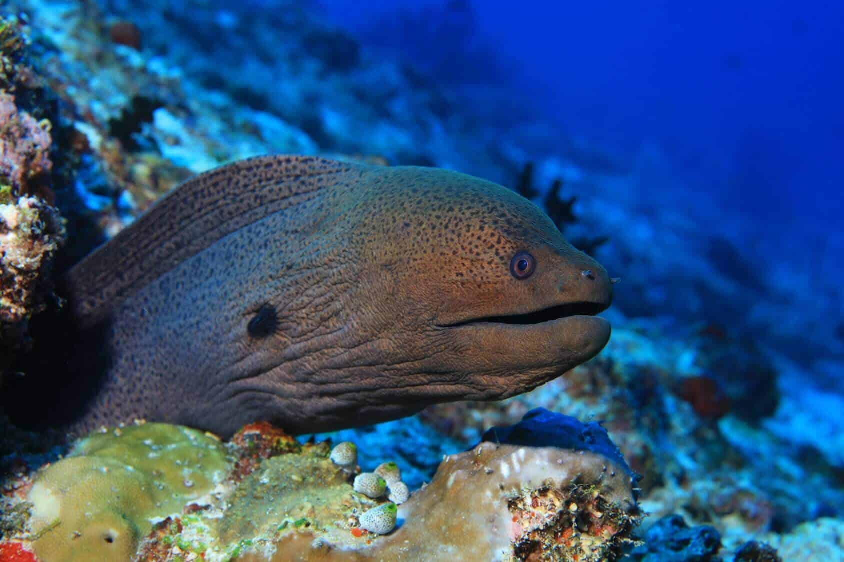 Moray Eel Complete Guide: Species, Habitat and Much More... - Fishkeeping  World