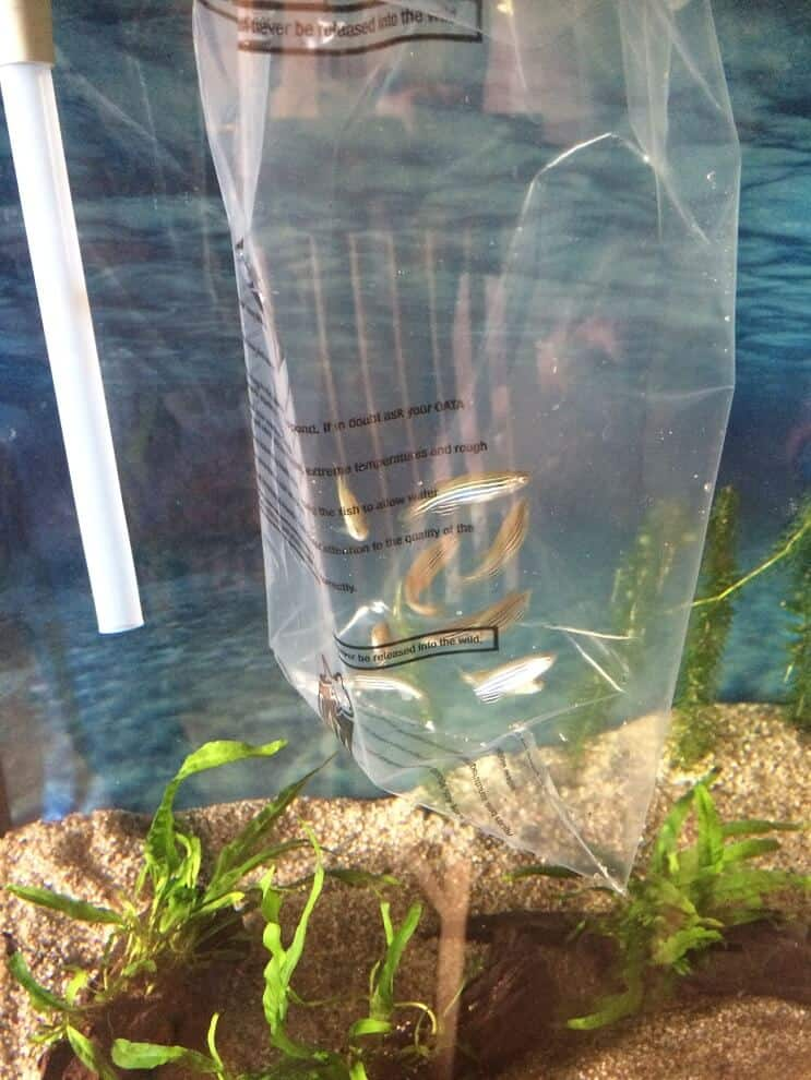 Adding Fish To Tank