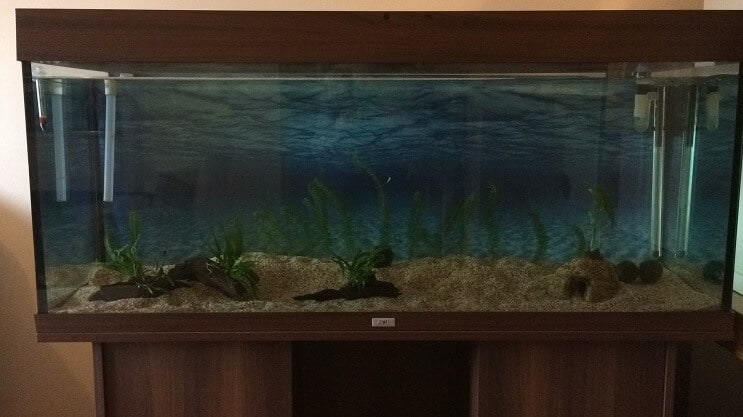 How to Set Up a Fish Tank in 7 Easy Steps | Fishkeeping World