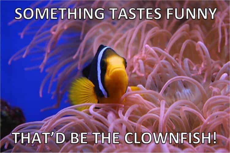 Clownfish Fish Puns