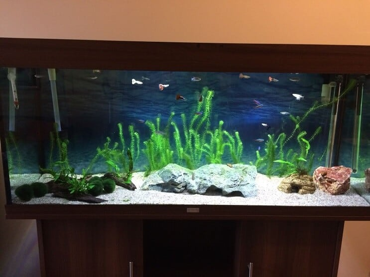 Finished Tank