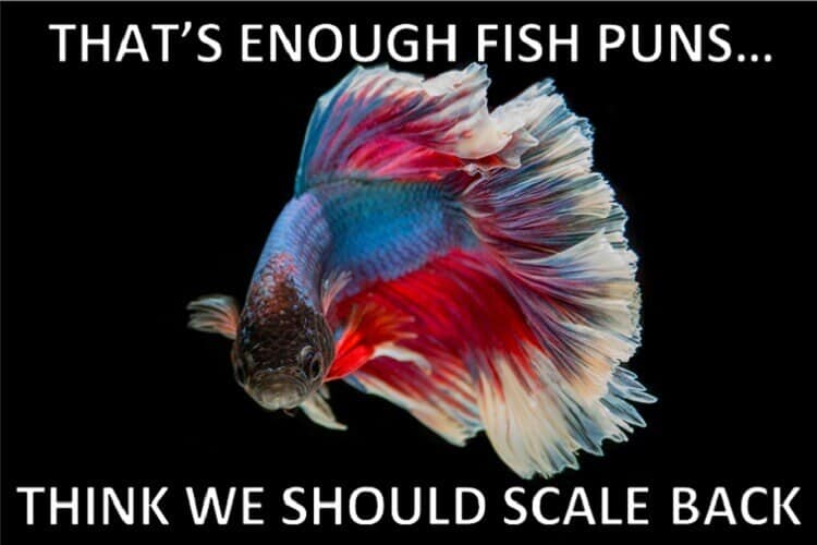 The Ultimate Fish Puns Collection Fishkeeping World