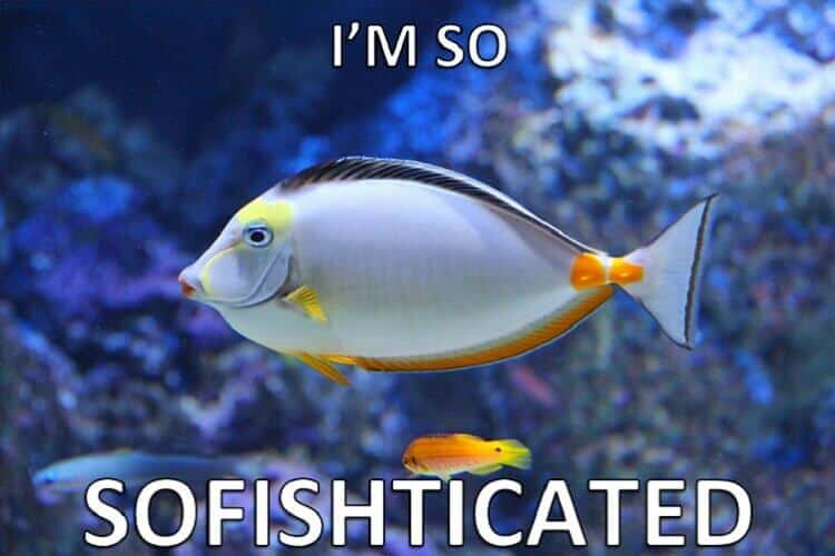The Ultimate Fish Puns Collection | Fishkeeping World