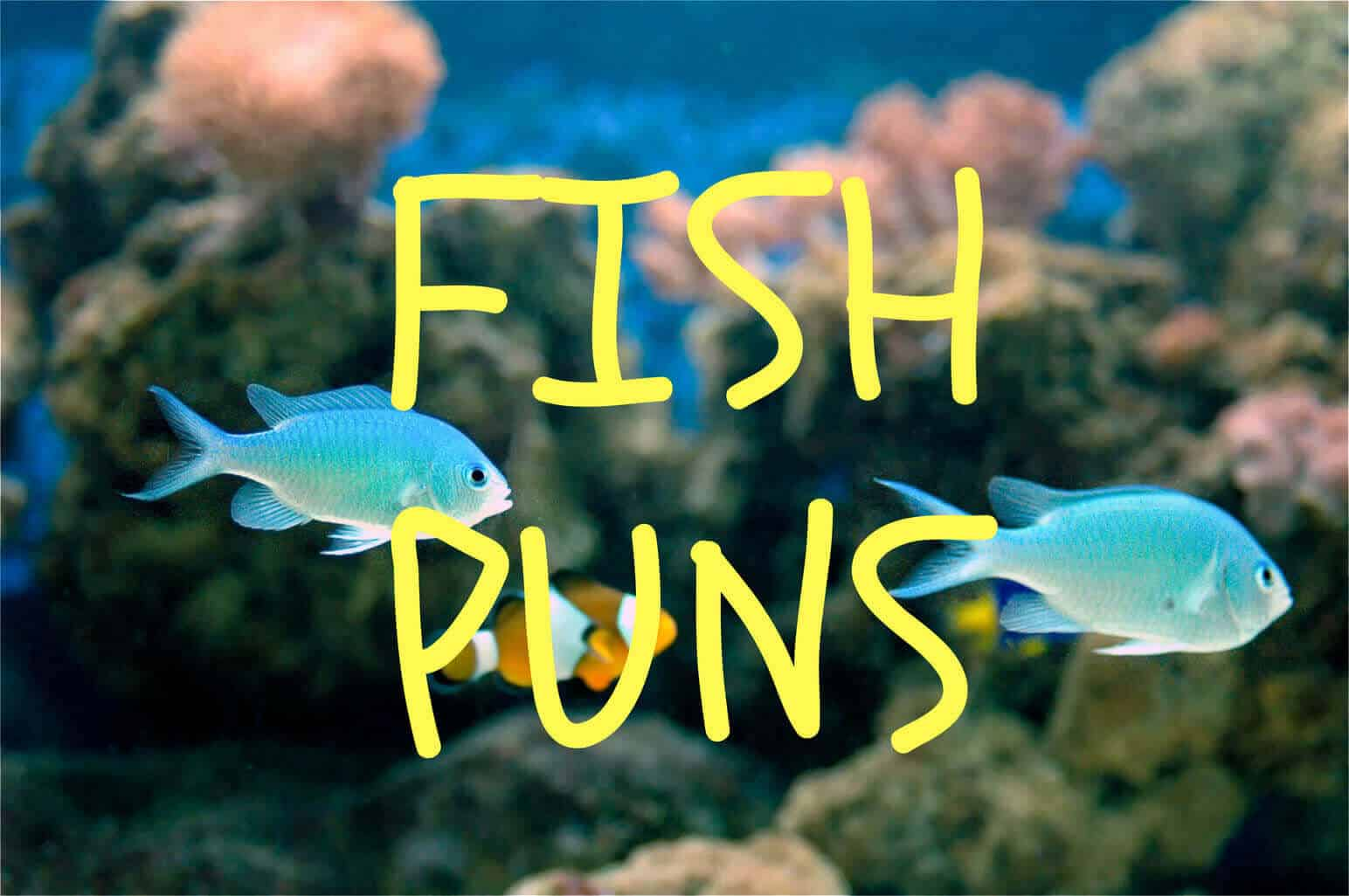 The Ultimate Fish Puns Collection 2020 - Fishkeeping World