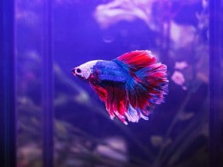 7 Best Betta Fish Tanks What To Know Before Buying Banner