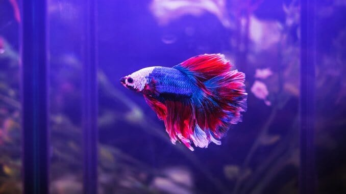 7 Best Betta Fish Tanks: What To Know Before Buying | Fishkeeping World