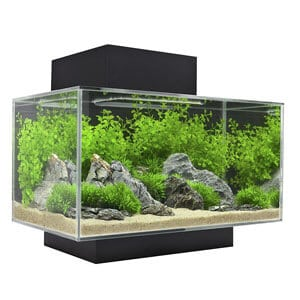 7 Best Betta Fish Tanks What To Know Before Buying Fishkeeping World
