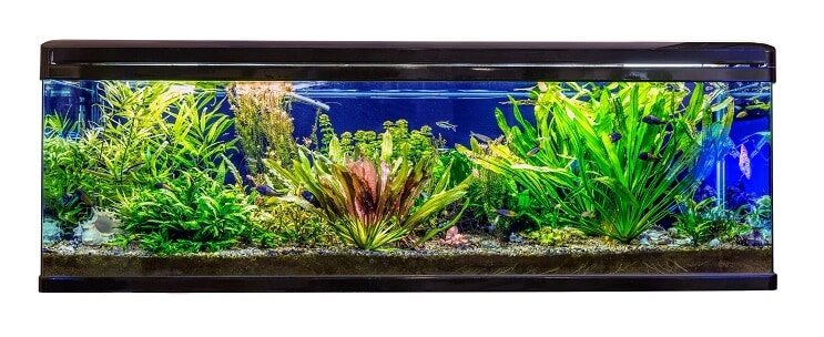 Ideal Habitat and Tank Conditions