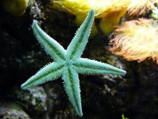 What do Starfish Eat Starfish Diet 101 Banner