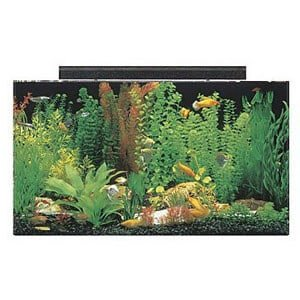50 Gallon Tank Ideal for a Large Paludarium