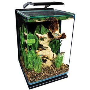 Small Aquarium Ideal for Countertop Paludarium