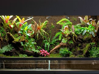 The Definitive Guide to Creating a Paludarium Banner