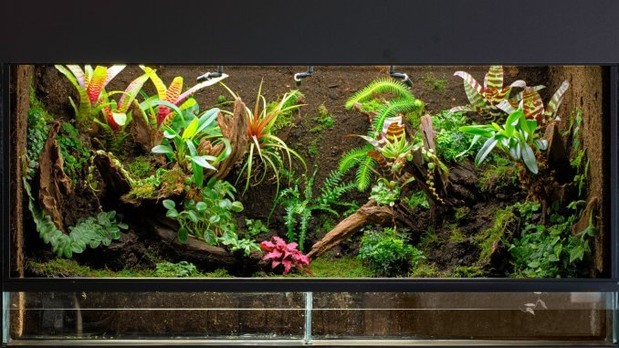 the definitive guide to creating a paludarium tank plants and