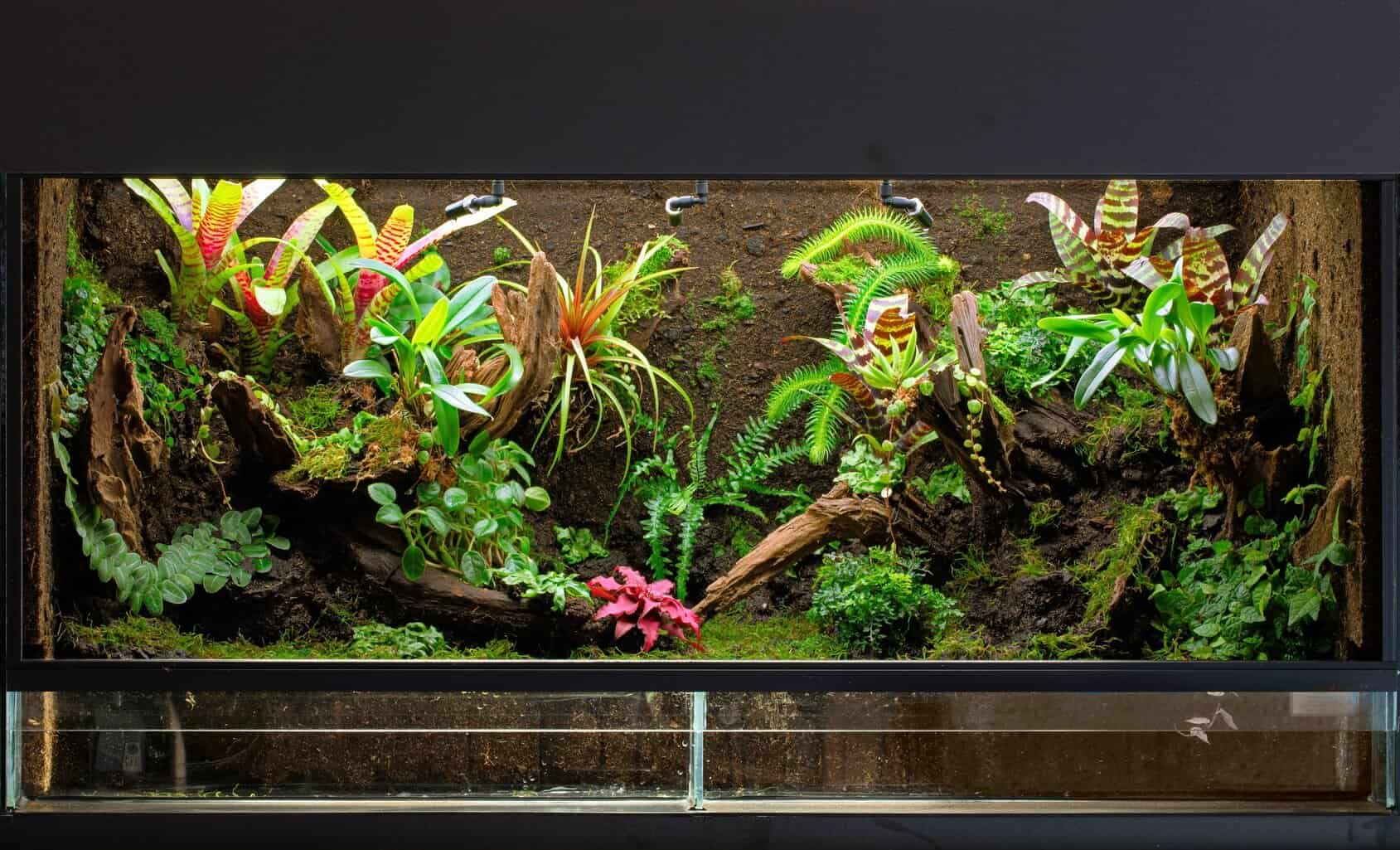 The Definitive Guide To Creating A Paludarium Tank Plants And Building Suggestions Fishkeeping World