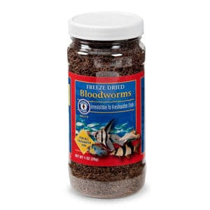 Bloodworms: All You Need To Know About This Aquarium Food