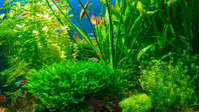 Staurogyne Repens Plant Care Guide (Carpet Growing and More...)