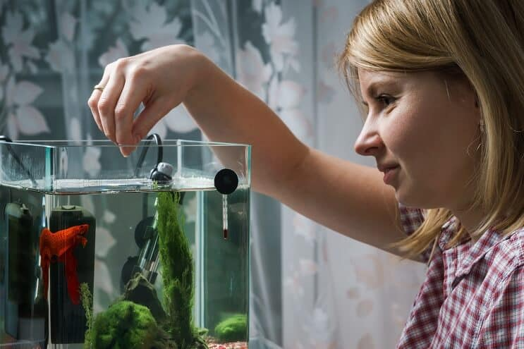 Women Feeding Betta