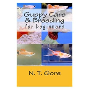 Beginners Guide to Caring for Guppies