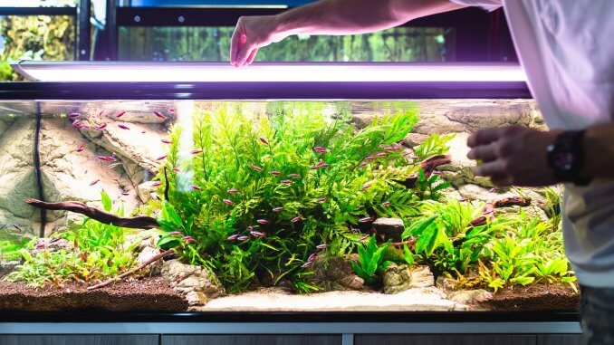 Bloodworms All You Need To Know About This Aquarium Food Banner