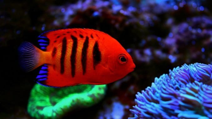 The 15 Most Beautiful Fish in the World Banner