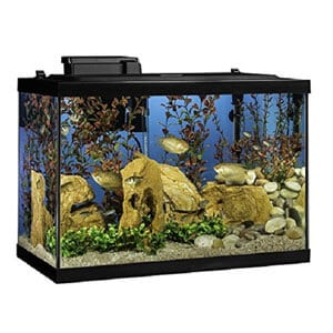 Best 20 Gallon Aquarium Starter Kit