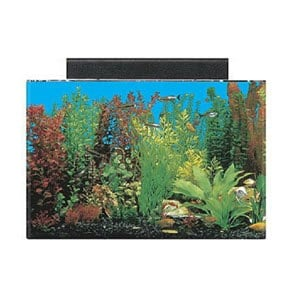 Best 20 Gallon Aquarium