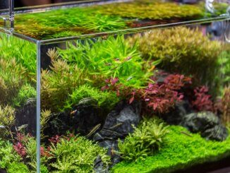 Best 20 Gallon Aquariums Setups, Tanks and Stocking Ideas Cover