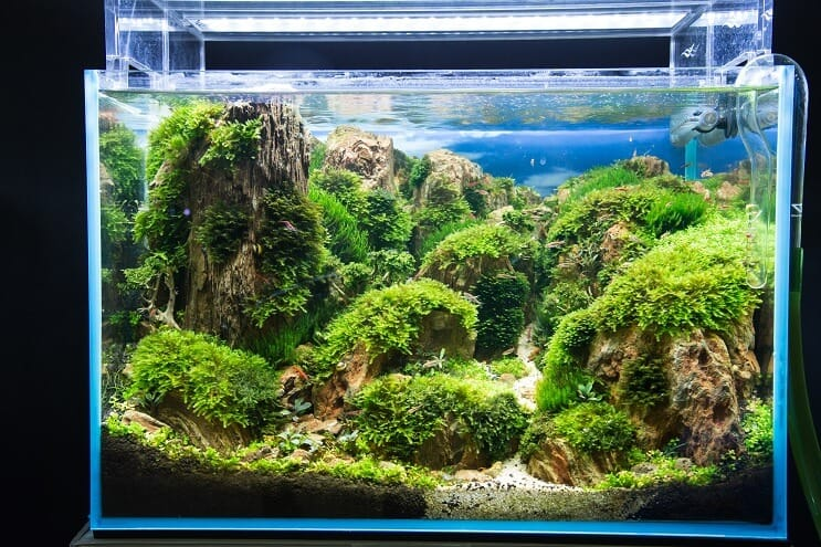 How to set up a fish tank